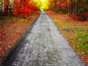 fall adirondacks